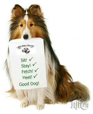Dogsmart Dog Trainer In Port Harcourt   Dogs & Puppies for sale in Rivers State, Port-Harcourt