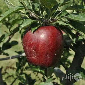 Red Apple Seedlings | Feeds, Supplements & Seeds for sale in Plateau State, Jos