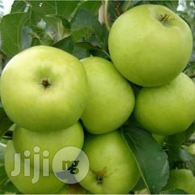 Green Apple Seedlings