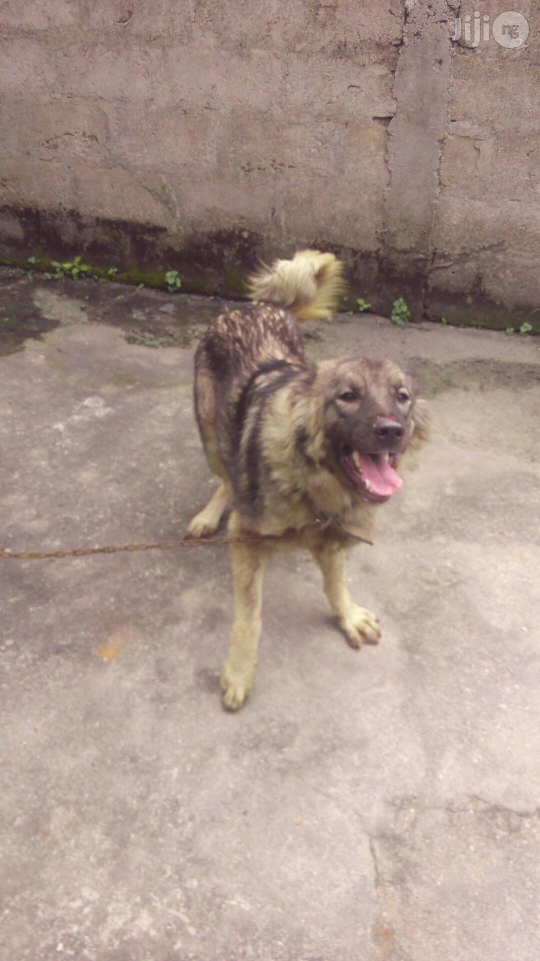 Dog Trainer In Port Harcourt
