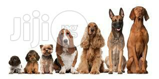 Dog Trainer In Port Harcourt   Dogs & Puppies for sale in Port-Harcourt, Rivers State, Nigeria