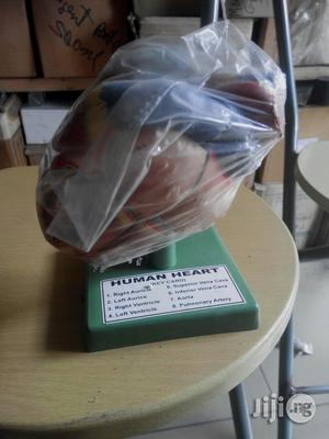 Human Heart Model | Medical Supplies & Equipment for sale in Rivers State, Port-Harcourt