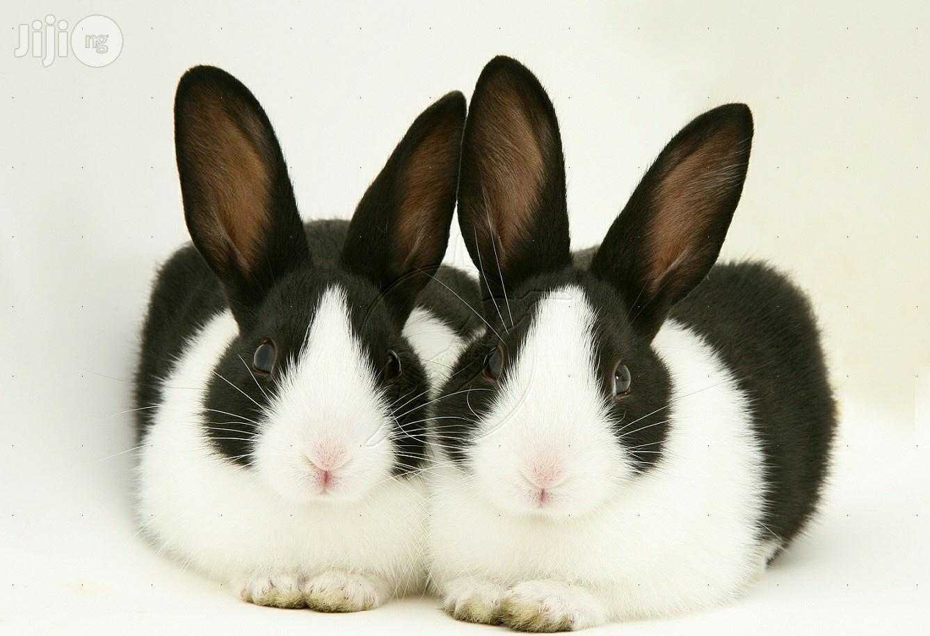 Rabbits Of Different Colors And Breeds