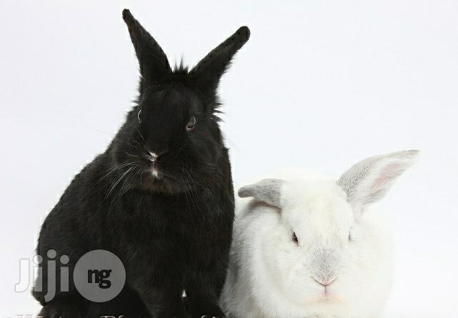 Rabbits Of Different Colors And Breeds   Livestock & Poultry for sale in Kaduna / Kaduna State, Kaduna State, Nigeria