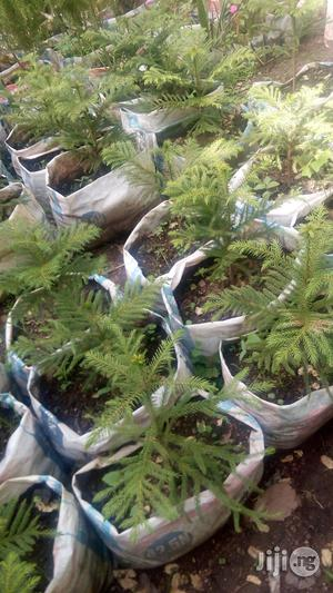 Plants Seedlings And Seeds | Feeds, Supplements & Seeds for sale in Lagos State, Gbagada