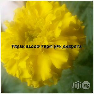 Marigold Flower Seedlings | Feeds, Supplements & Seeds for sale in Plateau State, Jos