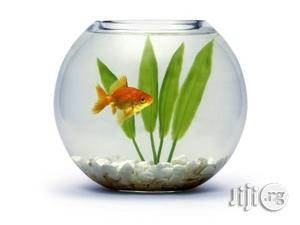 6 Liters Fish Bowl Aquarium Basic Kit + One Goldfish | Fish for sale in Lagos State, Surulere