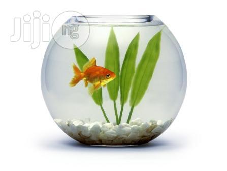 6 Liters Fish Bowl Aquarium Basic Kit + One Goldfish