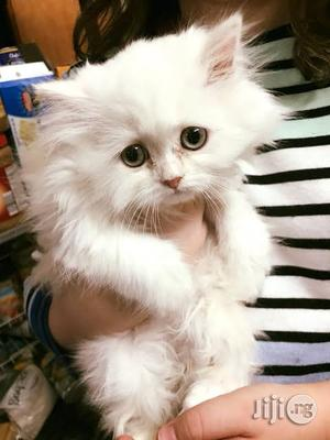 1-3 Month Female Purebred Persian | Cats & Kittens for sale in Lagos State, Alimosho