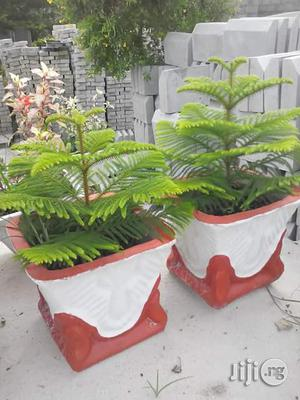 Flowers And Assorted Plants | Garden for sale in Lagos State, Alimosho