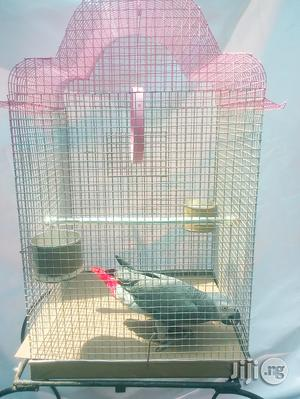 African Grey Parrot With Cage | Birds for sale in Lagos State, Apapa