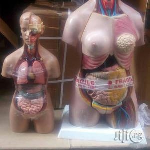 Human Truck Model | Medical Supplies & Equipment for sale in Abuja (FCT) State, Maitama