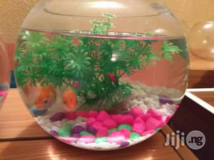 Fish Bowl Mini Aquarium for Home and Office | Fish for sale in Lagos State, Ikoyi