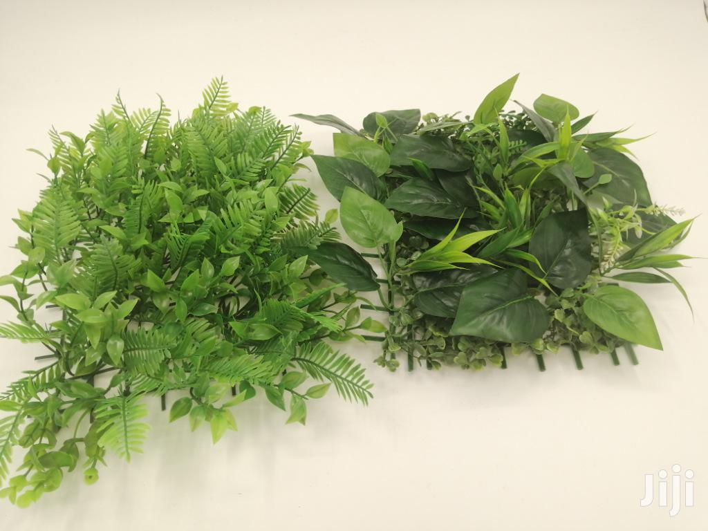 Quality Wall Plants For Sales