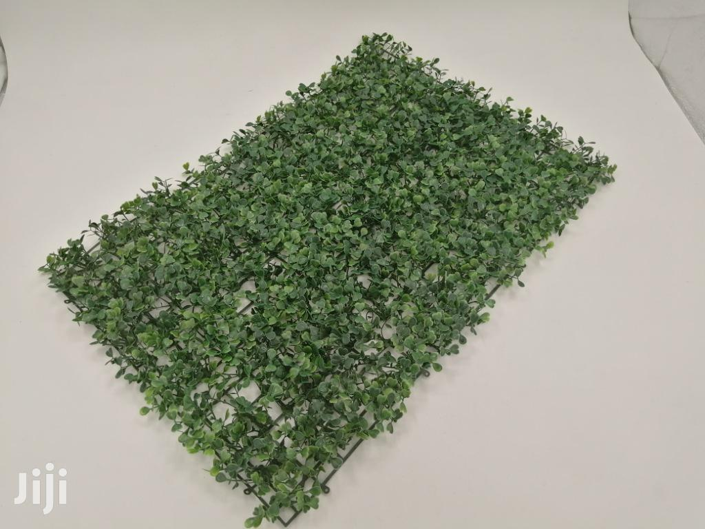 Affordable Quality Wall Plants At Sales | Garden for sale in Ugheli, Delta State, Nigeria