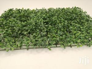 Quality Affordable Wall Plants For Sales | Garden for sale in Ebonyi State, Abakaliki