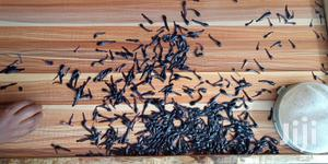Catfish Seed Fingerlings | Livestock & Poultry for sale in Ogun State, Ijebu Ode