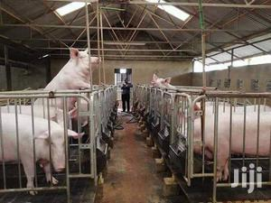 Matured Pig | Livestock & Poultry for sale in Oyo State, Ibadan
