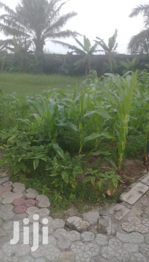 One Plot Of Land For Lease | Land & Plots for Rent for sale in Lagos State, Lekki