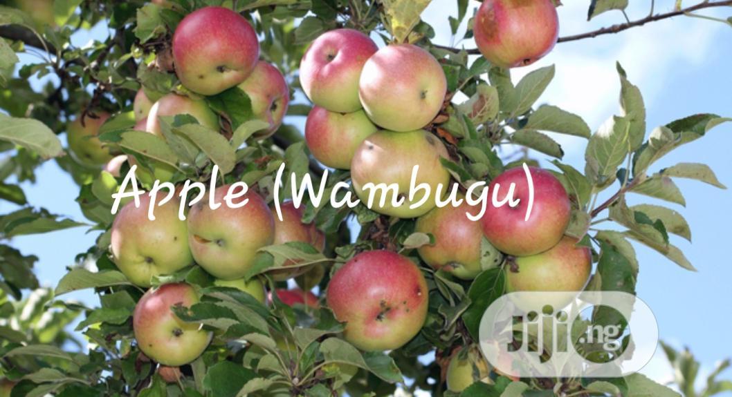 Apple (Wambugu) Seedling For Sale