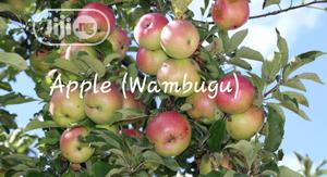 Apple (Wambugu) Seedling For Sale | Feeds, Supplements & Seeds for sale in Oyo State, Ibadan