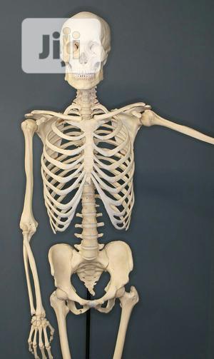 Human Skeleton   Medical Supplies & Equipment for sale in Lagos State, Lagos Island (Eko)