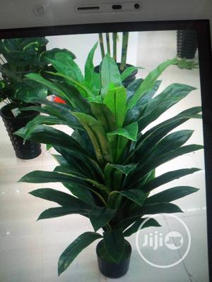 Flower With Vessels   Garden for sale in Lagos State, Ikorodu