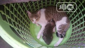Young Female Purebred Mongrel (No Breed) | Cats & Kittens for sale in Lagos State, Ojo