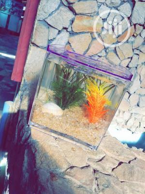 Minii Aquarium | Fish for sale in Lagos State, Ipaja