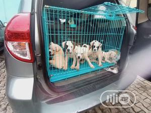 1-3 Month Female Purebred Bulldog | Dogs & Puppies for sale in Lagos State, Lekki