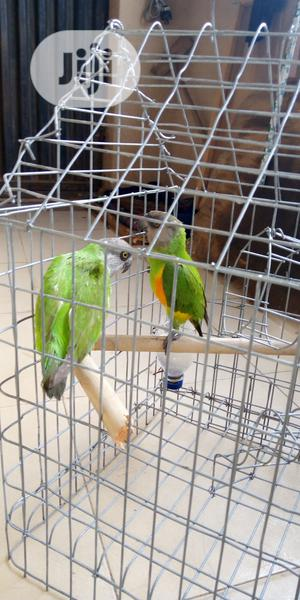 Sanegal Parrot and Deliver Cage | Birds for sale in Lagos State, Alimosho