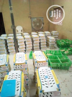 Day Old Cockrel And Noiler   Livestock & Poultry for sale in Oyo State, Ibadan