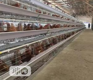 China Factory Poultry Cage Hot Galvanized Battery Cage   Farm Machinery & Equipment for sale in Ogun State, Ifo