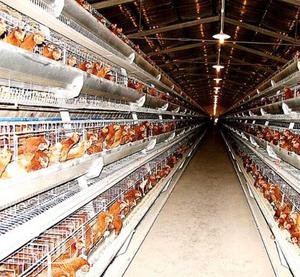 Battery Cages China Factory Wholesale Price Best Quality Poultry Cages | Farm Machinery & Equipment for sale in Oyo State, Akinyele
