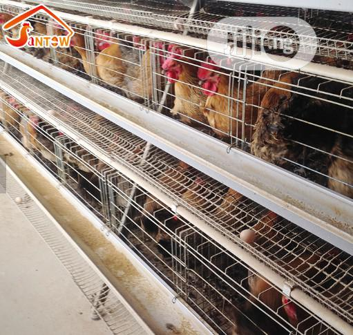 China Factory Battery Cage Best Quality Poultry Cages