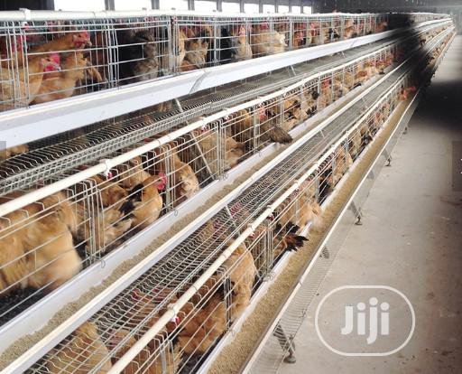 China Factory Battery Cage Best Quality Poultry Cages | Farm Machinery & Equipment for sale in Adavi, Kogi State, Nigeria