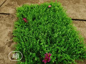 Artificial Wall Creeping Flower For Playground Decorations | Toys for sale in Lagos State, Ikeja