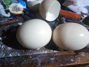 Shells Of Ostrich Eggs Available | Meals & Drinks for sale in Kaduna State, Zaria