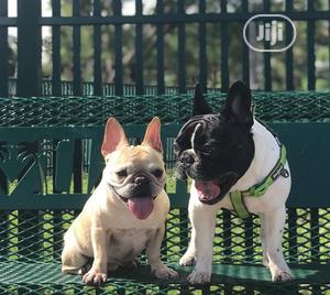 1-3 Month Female Purebred French Bulldog | Dogs & Puppies for sale in Lagos State, Lagos Island (Eko)