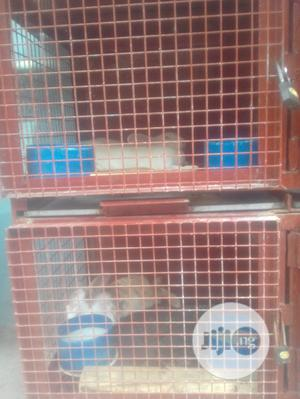 Rabbits for Sale | Livestock & Poultry for sale in Lagos State, Ikeja