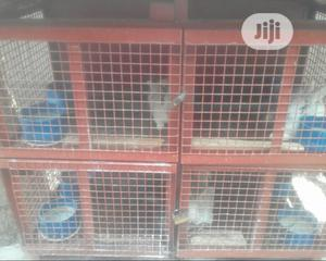 Rabbits for Sale   Livestock & Poultry for sale in Lagos State, Ikeja