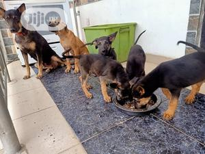 1-3 Month Female Purebred German Shepherd | Dogs & Puppies for sale in Lagos State, Ikoyi