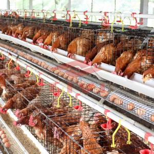 Cages For Birds   Farm Machinery & Equipment for sale in Lagos State, Orile