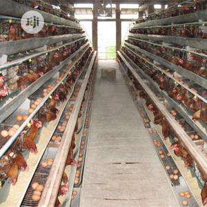 China Factory Best Battery Cage Hot Galvanized Poultry Cage | Farm Machinery & Equipment for sale in Oyo State, Akinyele