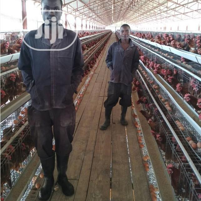 China Factory Hot Dipped Galvanized Battery Cage Quality Poultry Cage