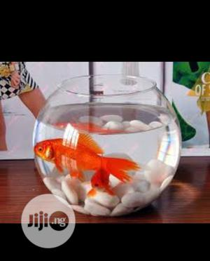 Full Fish Bowl Kit   Pet's Accessories for sale in Lagos State, Surulere
