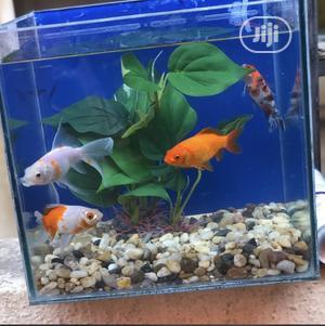 Mini Aquarium | Fish for sale in Lagos State, Lagos Island (Eko)