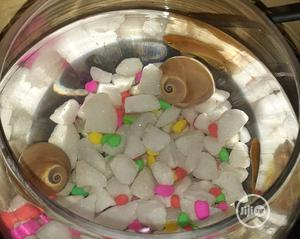 Fish Bowl For Office And House Decoration | Pet's Accessories for sale in Lagos State, Surulere