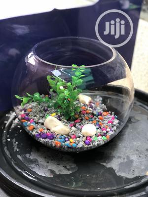 Aquarium Fish Bowl | Fish for sale in Lagos State, Ikorodu