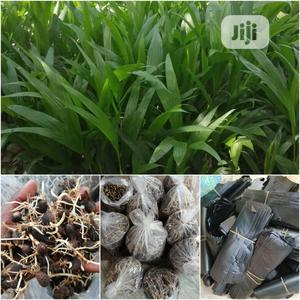 Unity Continental Farms | Feeds, Supplements & Seeds for sale in Ogun State, Obafemi-Owode